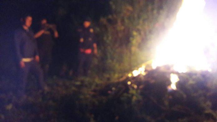Policía de Cajabamba destruyó 103 plantones de marihuana
